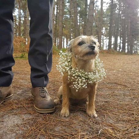 oh-bella-dog-with-wedding-garland-2